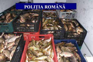 Polițiștii au confiscat 300 de kg de pește proaspăt