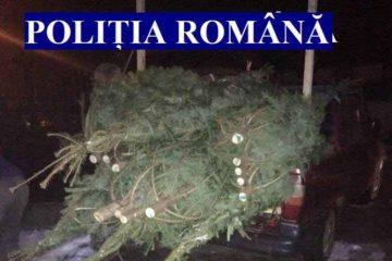 Neamț: Polițiștii au confiscat pomi de Crăciun tăiați fără drept