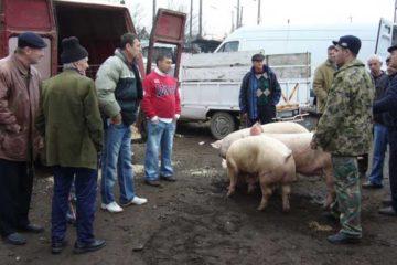 De unde puteți cumpăra carne de porc pentru Crăciun, la un preț bun. Prețul cărnii de porc, în viu, în fiecare județ