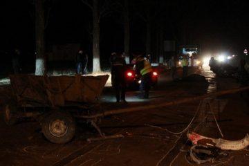 Bilanțul unui accident rutier produs la Luțca – Sagna: un cal mort și căruțașul accidentat grav
