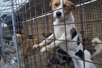 Roman: 573 de câini capturați, 216 adoptați, 352 de câini, eutanasiați