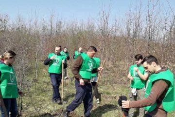 Felicitări! Polițiștii de la Secția Români au plantat peste 1.900 de stejari și frasini, la Bașta
