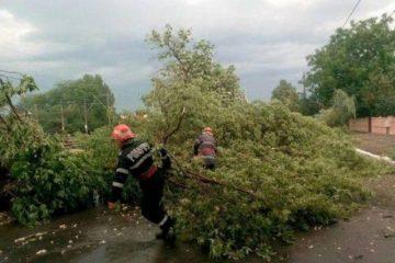 Furtună în Neamț: mai multe drumuri blocate de copacii căzuți pe carosabil
