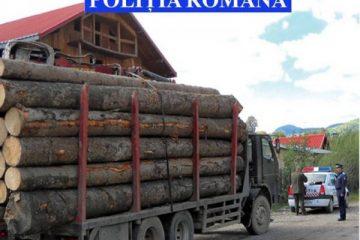 Acțiune de amploare a polițiștilor în zona Roman, pentru combaterea furturilor de lemne și a răspândirii pestei porcine