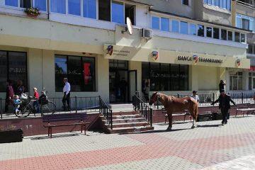 Cu calul la bancă, în centrul municipiului Roman