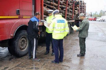 Transporturi de lemne fără documente, depistate de polițiștii din Neamț