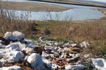 Roman: Somații pentru igienizarea proprietăților și amenzi pentru depozitarea deșeurilor pe domeniul public