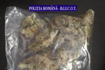 Neamț: două percheziții – 1,5 kg de droguri, confiscate