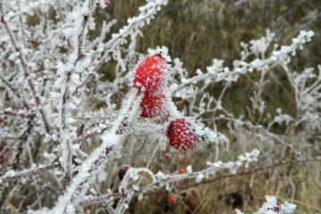 Noapte deosebit de rece, în Neamț. Vezi prognoza pentru 24 de ore