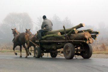 Reținut pentru delapidare; două căruțe cu lemne nu aveau documente justificative