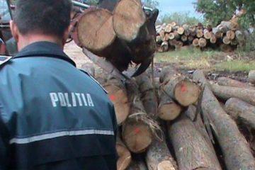Neamț: polițiștii au confiscat valoric 1.600 metri cubi material lemnos în valoare de 472.217 lei