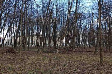 În Parcul Municipal Roman, vijelia a smuls copacii din rădăcini