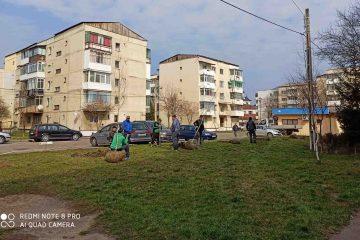 Campanie de plantare: sute de arbori și mii de panseluțe înfrumusețează municipiul Roman