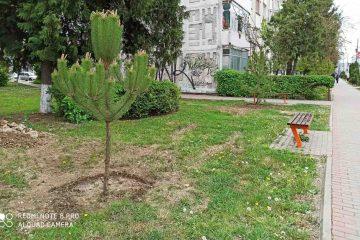 Sute de arbori au fost plantați în Municipiul Roman. Campania de plantare va continua