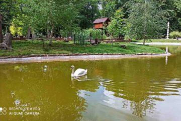 Foto: Parcul municipal Roman vă așteaptă cu noutăți. Aici puteți admira cel mai frumos fazan din lume