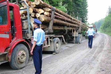În urma unei sesizări, polițiștii nemțeni au confiscat peste 43 mc de lemne