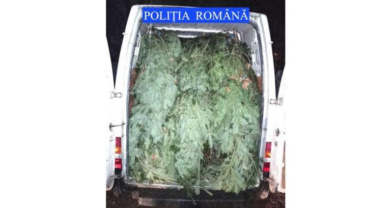 Romașcan depistat cu peste 100 de pomi de Crăciun nemarcați după ce a fost oprit în trafic la Girov