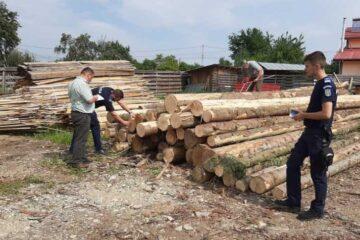 În Neamț, au fost confiscați 84,655 de metri cubi de material lemnos, în valoare de aproximativ 20.341 de lei